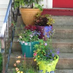 gardens and pots 021
