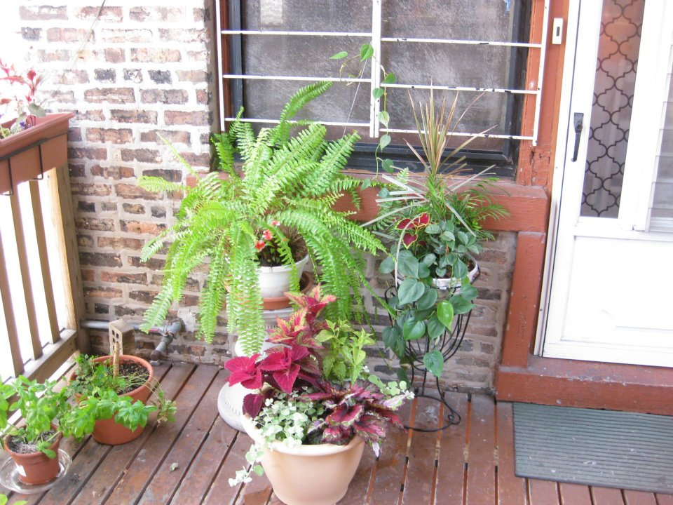 Amazing Shady Container Garden