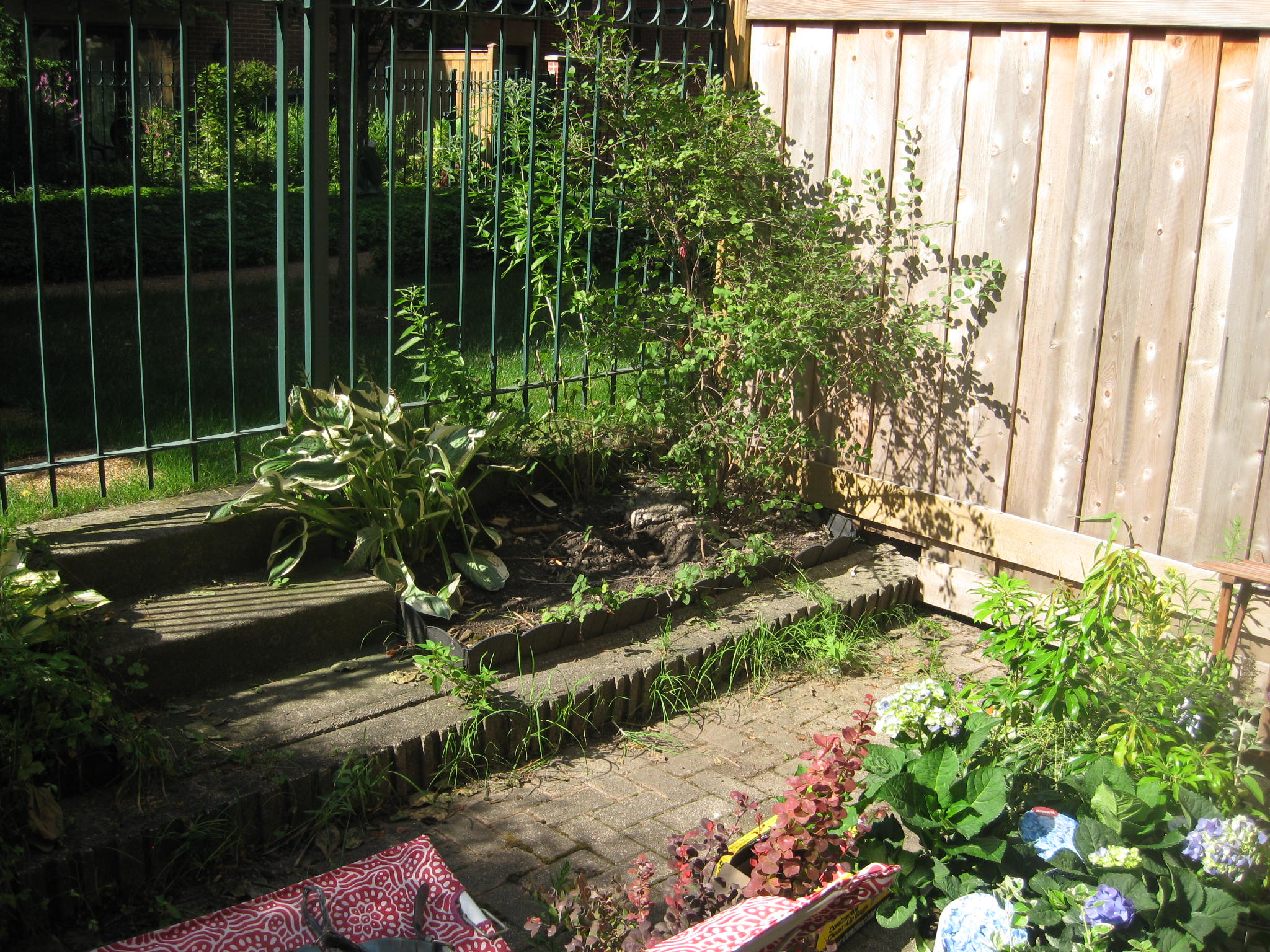 Kris before and afters garden 036 before
