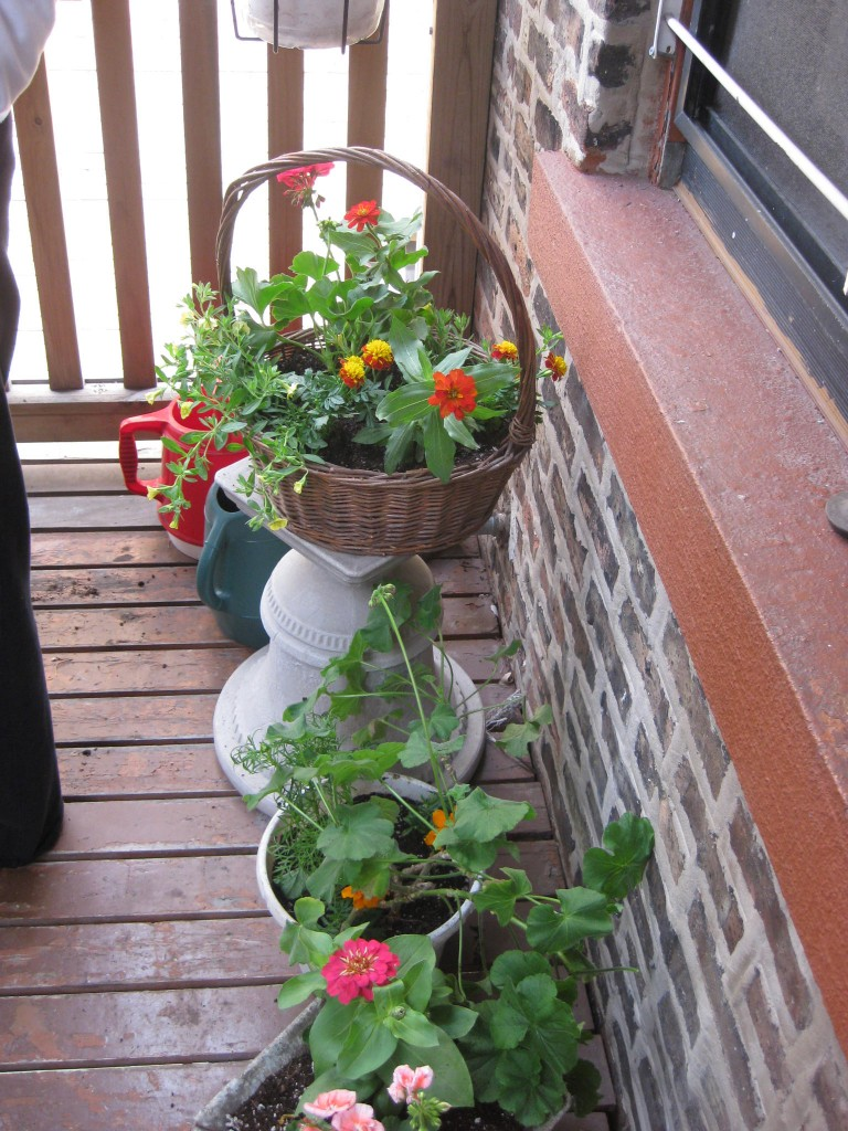 window container garden